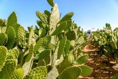 La mia passione per i cactus