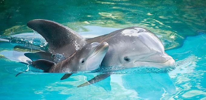 delf.jpg