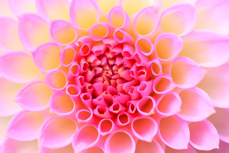 flowerimage_orig.jpg