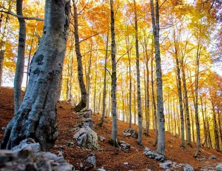 foglie-faggio-autunno.jpeg