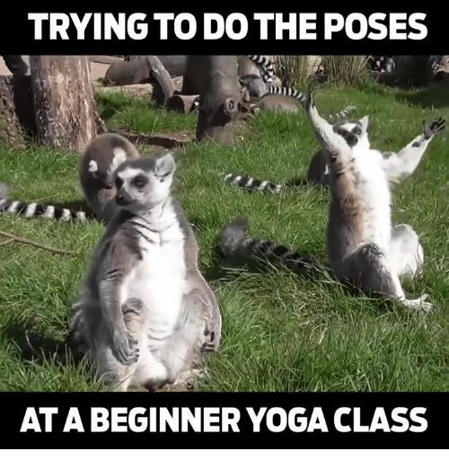 Yoga e meme :D