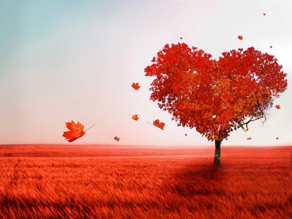 Path-of-love.jpg