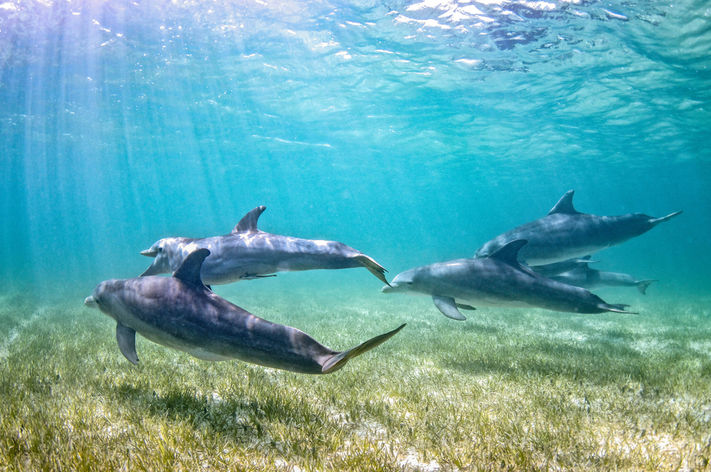 snorkel-with-dolphins-kona-hawaii-1.jpg