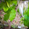 calice vino trasparente.jpg