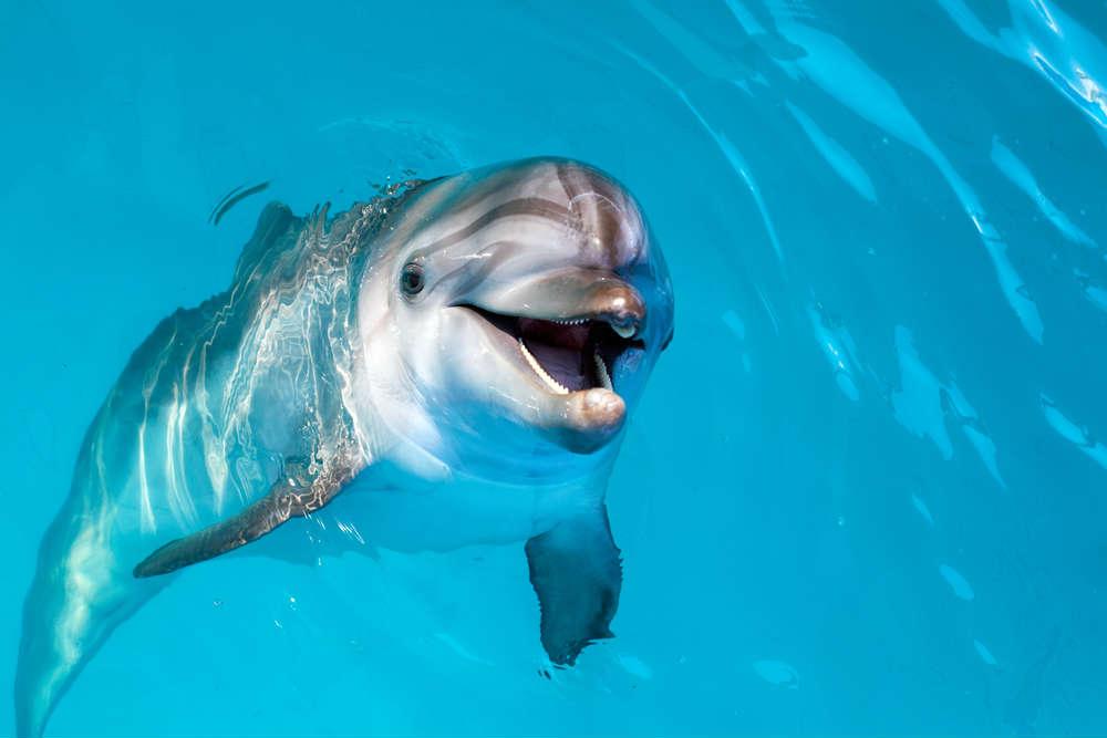 vietato-nuotare-con-i-delfini-3.jpg
