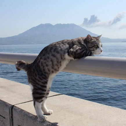 zajlhjqdy3-buongiorno-e-vi-auguro-un-week-end-come-se-lo-augura-questo-gatto_a.jpg
