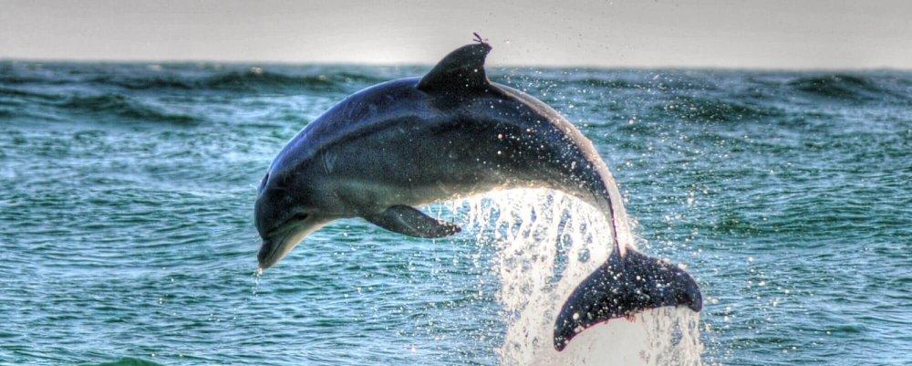 Blue-Wave-Adventures-Myrtle-Beach-Dolphin-Cruise-Jumping-Dolphin.jpg