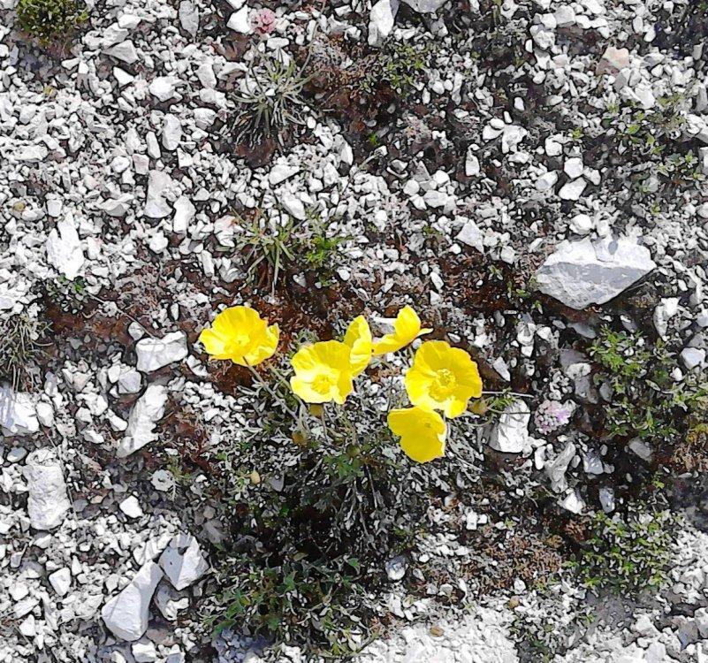 AA-flora78.jpg
