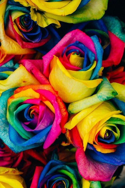 bulk-rainbow_roses-wholesal.jpg