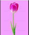 image.png.625aad252a5b72559ad410dc657fee02.png