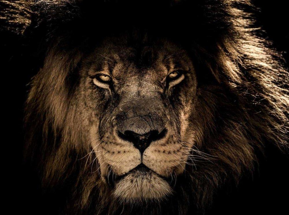 leone s.jpg