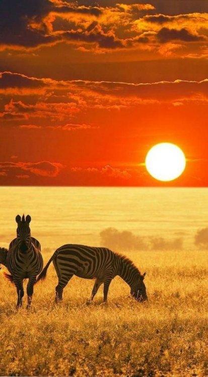 Savana africana.jpg