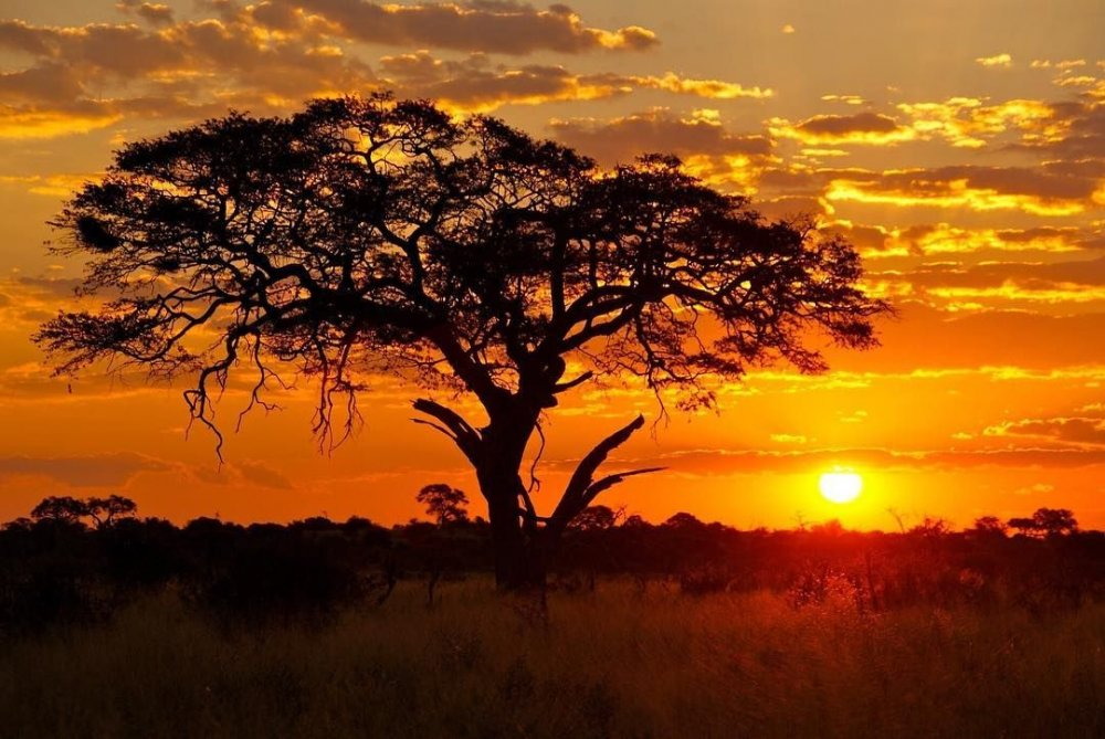 "Fynch-Hatton on Instagram_ ""One of the most beautiful things in nature_ an African sunset! There is no filter on this picture_ The colors of the sunset result from a…"".jpg"