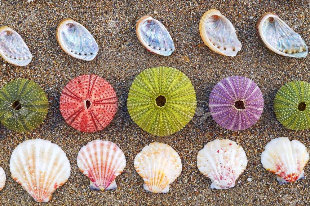 34222430-varietà-di-ricci-di-mare-colorate-e-conchiglie-sulla-spiaggia.jpg