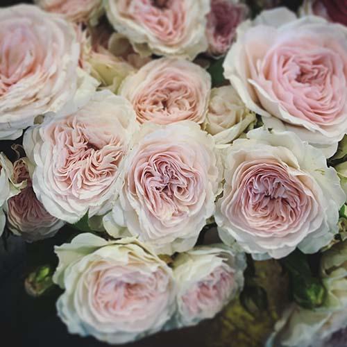 fiori-bouquet-simmi-torino-rose-inglesi-3.jpg