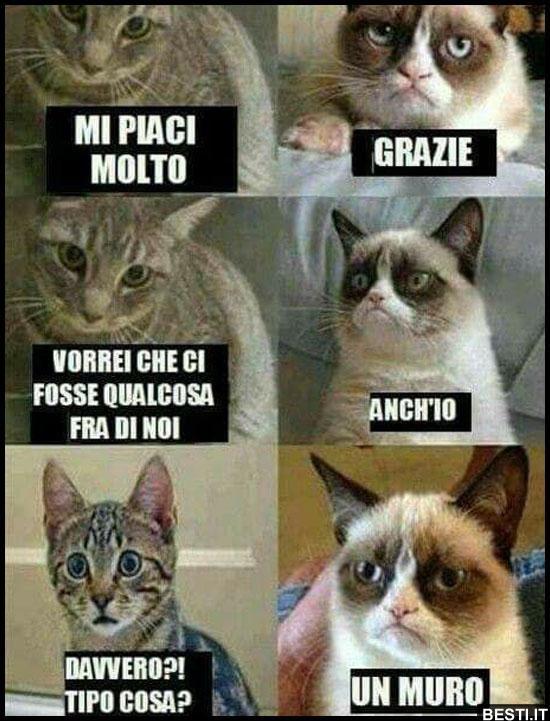 gatti.jpg
