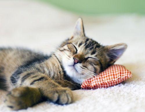 gatto_dormire.jpg