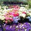 coloriefiori_.jpg