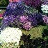coloriefiori_2.jpg