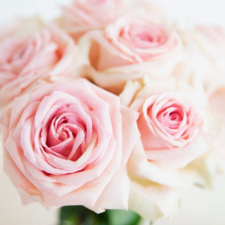 roseee.jpg