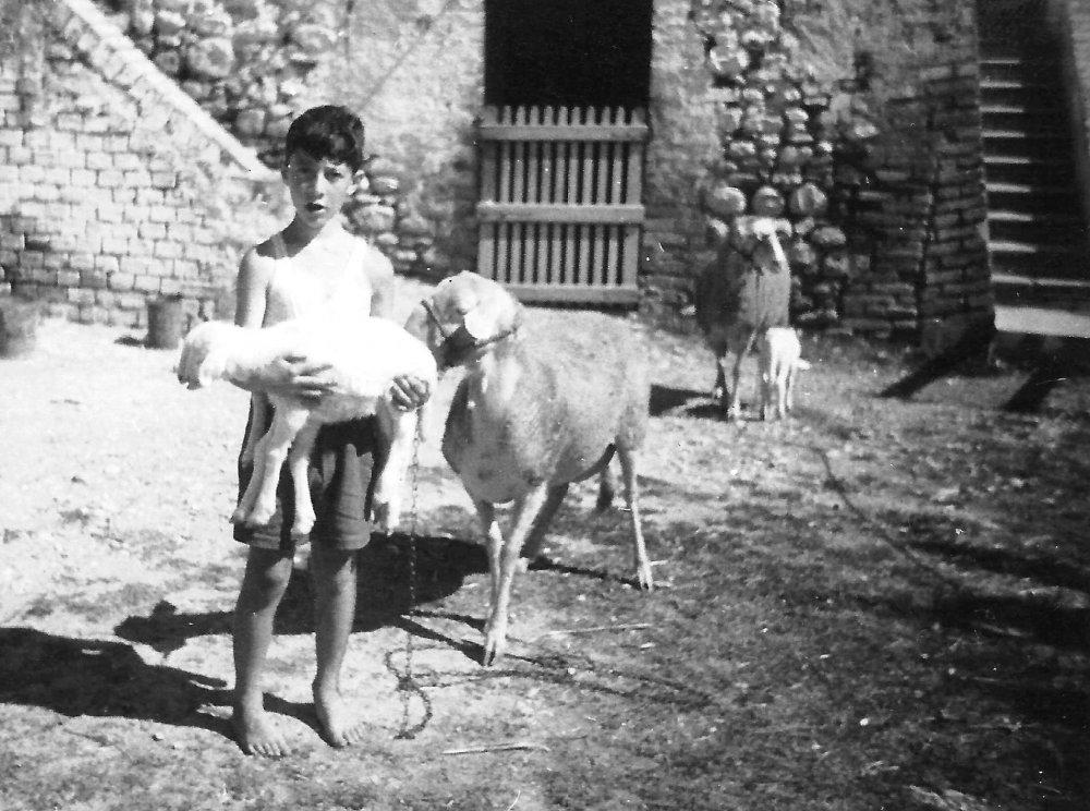 1956 pecore.jpg