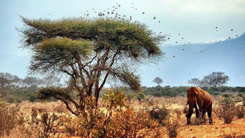 Elefante nel Parco Tsavo Est