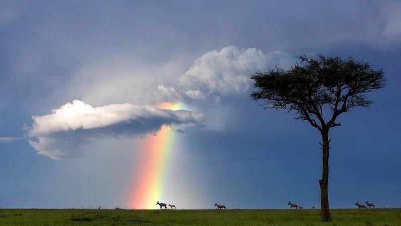 Un momento fortunato nel Masai Mara