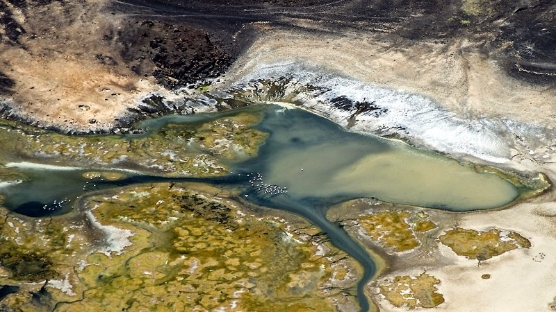 Kenya. Lago Logipi e fenicotteri