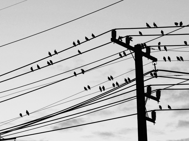 silhouette-bird-cable-wire_33389-15.jpg