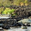 Kenya. Fiume Mara