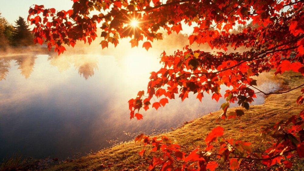 benvenuto-autunno-frasi-immagini-video-whatsapp-instagram-facebook.jpg