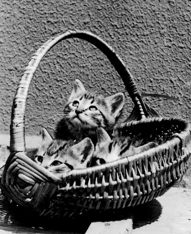 gattini2.jpg