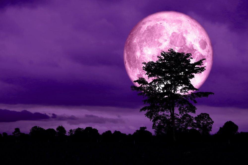 luna-rosa.jpg