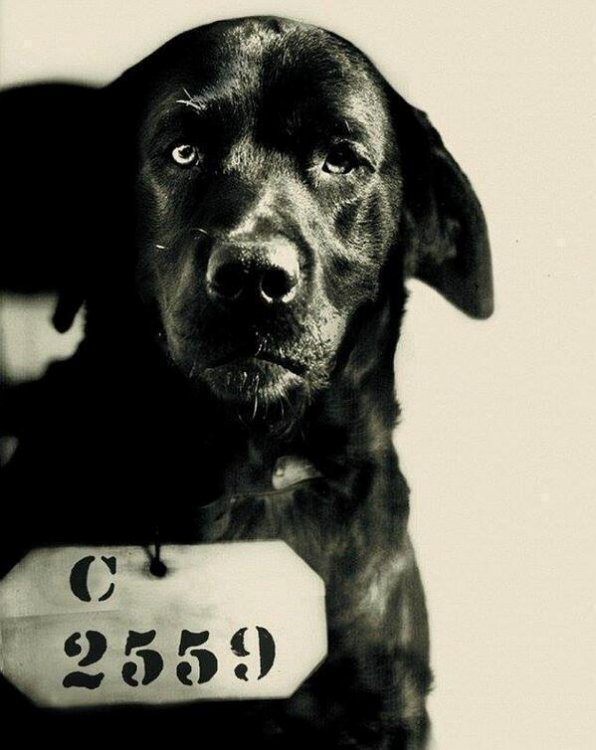 pep-the-dog-who-was-sentenced-to-life-in-prison-for-killing-pennsylvania-governors-cat-1924.thumb.jpg.059520ab24b146806312cff07556b53b.jpg
