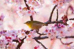 I miei fotografi naturalistici preferiti