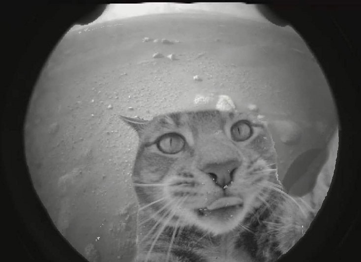 first-mars-perseverance-picture-cat-selfie-photoshopped.jpg