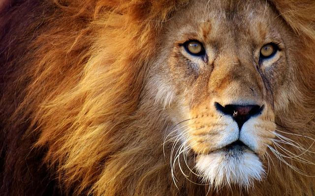 peso-leone.jpg