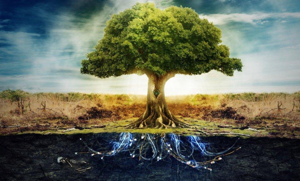 tree-of-life-wallpaper.jpg