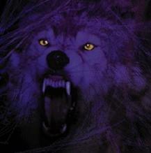 AngryWolf4.jpg