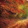 road-alb_natura