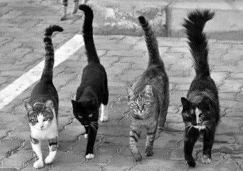 4vcax4gcn3-eravamo-quattro-gatti-al-bar-che-volevano-cambiare-il-mondo-destinati-a-qualche_b.jpg