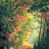 beauty &nature
