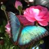 BlueButterflyPinkFlower_1024x.png