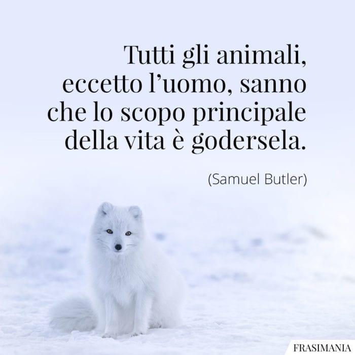 frasi-animali-vita-godersela-butler-700x700.jpg