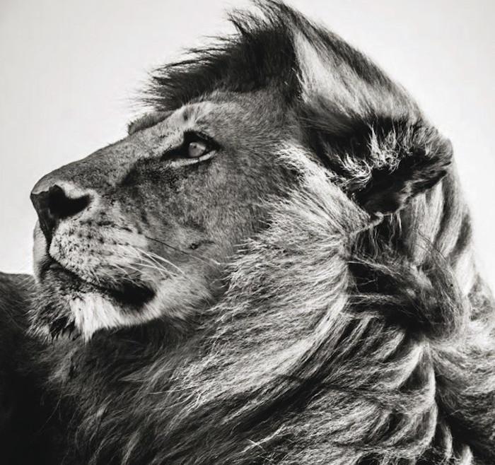 fotografia-bianco-e-nero-animali-selvatici-africa-laurent-baheux.jpg.d6bfb2c115d7e431e33b4fd9e02e8182.jpg